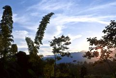from andes to amazon, view of the tropical rainforest, napo province, archido - stock photo