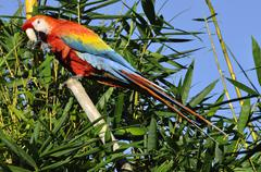 Amazonian macaw - ara ararauna in front of a blue sky Stock Photos