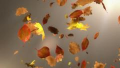 Falling Leaf Loopable Background Stock Footage