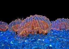 Alien Jellyfish Stock Photos