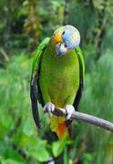 Parrot in the rainforest perching on a branch Stock Photos