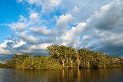 Amazonian rainforest. laguna grande, national park cuyabeno. ecuador Stock Photos