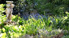 Garden time lapse sun shadow movement Stock Footage