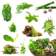 Collection of fresh herbs necessary on the each kitchen Stock Photos