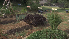 Garden patch windy WS Stock Footage