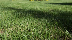 Green lawn for background. Dolly shot. Stock Footage