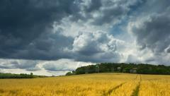 Summer landscape Stock Footage
