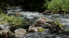 Njupan River Flowing in National Park Fulufjallet Sweden - 25FPS PAL Stock Footage
