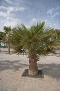 African Palm trees at bright summer day - stock photo