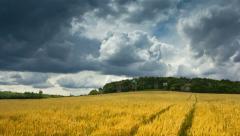 Summer landscape 4K Stock Footage