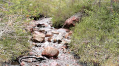 Small Downhill River Stream - 25FPS PAL - stock footage