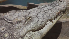 Nile crocodile blinking, Crocodylus niloticus, sitting in the sun, head close up Stock Footage