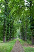 alley in park - stock photo
