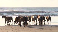 Free horses walking in a beach of Brazil Stock Footage