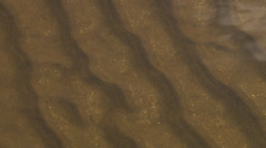 detail of the golden and bright sand at a shallow river - stock footage