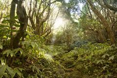 Forest trail to Lago Azul - stock photo