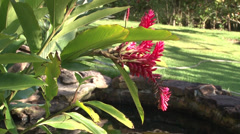 Heliconias close to a little pond Stock Footage