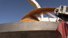 California Rice Farming, seeds in the boom hopper Stock Footage