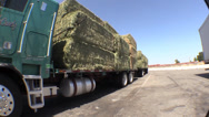 Stock Video Footage of hay truck alfalfa feed