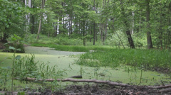 Marshland, swamp in the old forest 2 Stock Footage