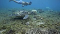 Man swimming next to green sea turtle underwater Stock Footage