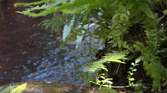 Fern And Water - 02 Stock Footage