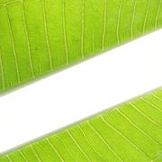 green Leaf with space for text - stock photo