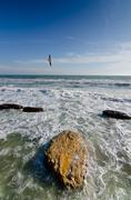 Seagull flying at blue sky - over the stormy ocean seacoast Stock Photos