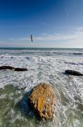 Lokki lentävät sininen taivas - yli myrskyinen valtameri rantaviiva Kuvituskuvat