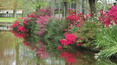 Azalea displays, keukenhof, holland, the netherlands Stock Footage