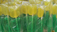 tulip shaped candy lollypops - stock footage