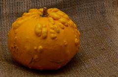 unusual yellow pumpkin - stock photo