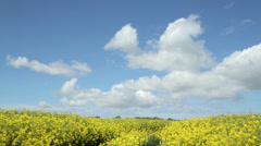 Yellow oil seed rape field against blue sky Stock Footage