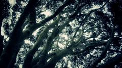 Creepy Tree Shot - stock footage