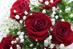 Stock Photo of rose closeup