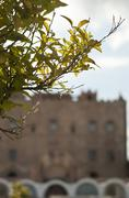 branch and the Zisa Castle in the background. - stock photo