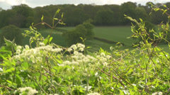 Hedge Row with shallow depth of field in spring time Stock Footage