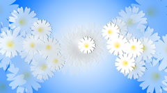 Daisy meadow on blue background. Animation. Stock Footage