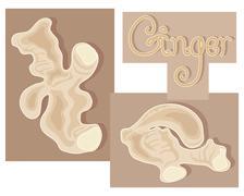 ginger - stock illustration