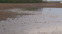 Flooded farm fields after thunder storms Stock Footage