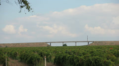 Timelapse grape field Stock Footage