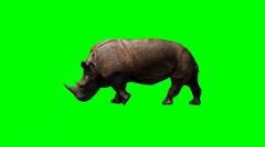 Rhinoceros walking - green screen Stock Footage