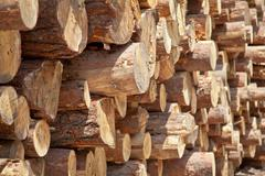 pile of logs - stock photo