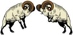 two fighting rams - stock illustration