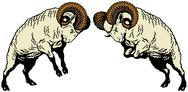 Two fighting rams Stock Illustration