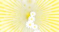 Daisy meadow on sunny background. Animation. Stock Footage