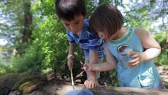 Children Search For Bugs On A Log, Little Girl Shows Older Brother Where To Look Stock Footage