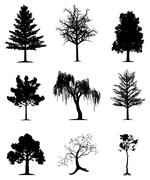 Stock Illustration of Trees collection