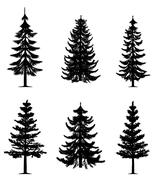 Pine trees collection - stock illustration