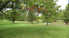 Midwestern Park almost Fall Stock Footage